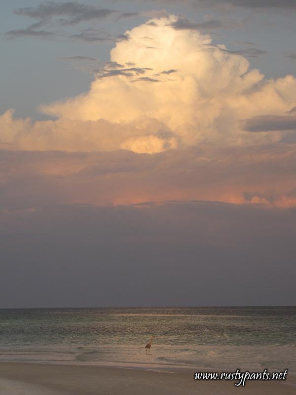 Great Blue Heron on Pensacola Beach