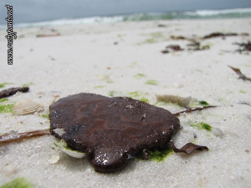 BP oil from oil spill found on Pensacola Beach 6-5-2010